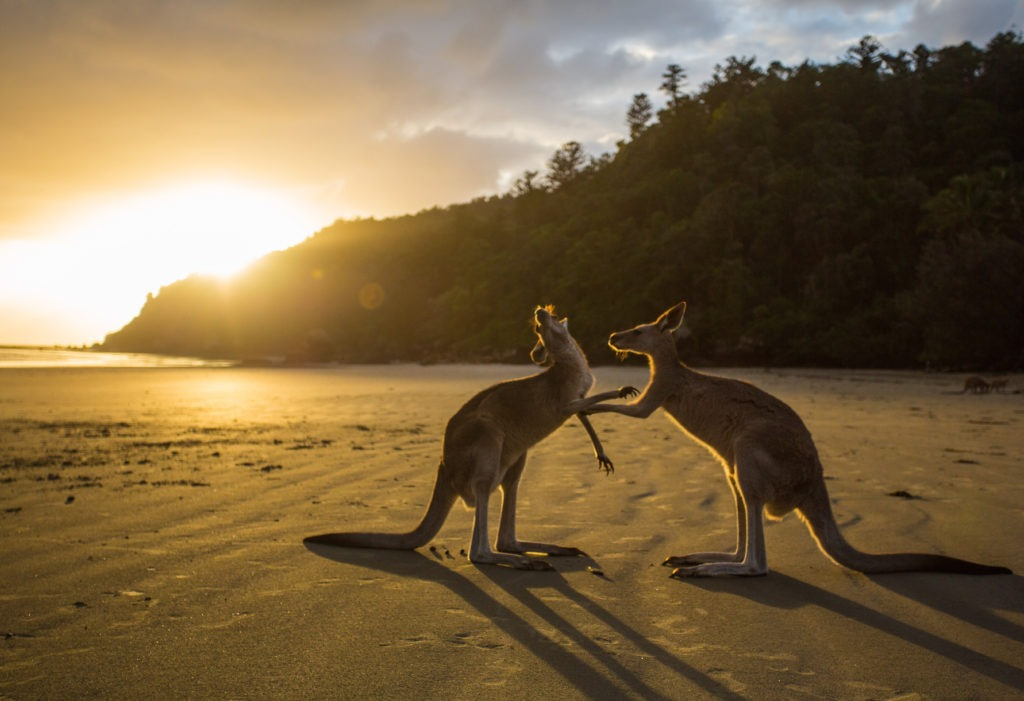 10 Razloga da posetite Australiju 2